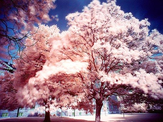 Albero con foglie luminose [Foto: Paul Dex]