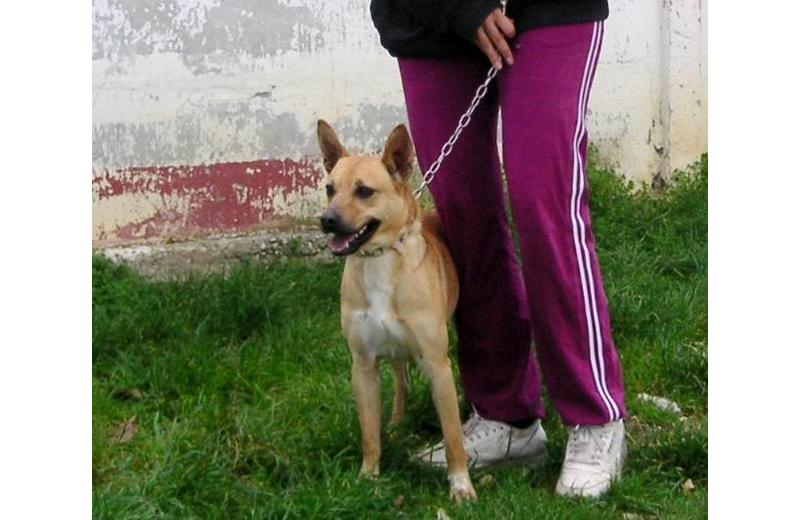 Adottate Zago: un cane speciale, un cane che se lo merita