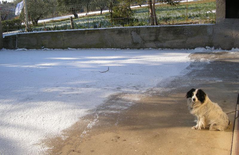 Neve 16 dicembre 2010 nelle colline di Cupra