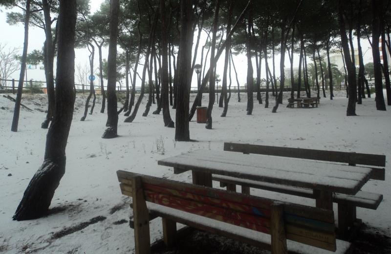 15 dicembre, mattina: la pineta di Alba coperta dalla neve