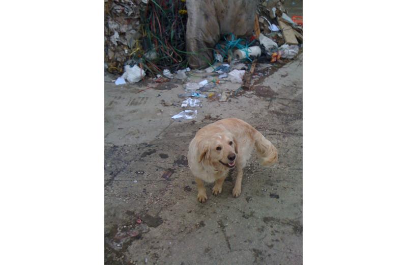 Il cane smarritosi sull'Ascoli Mare nei giorni scorsi