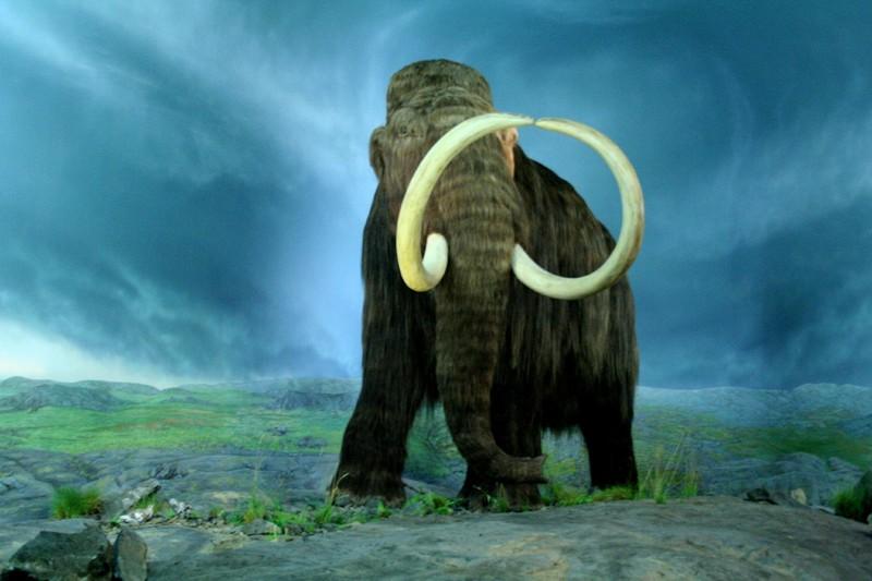 Esemplare di mammut lanoso