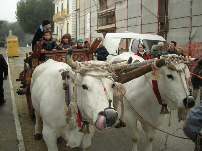 La Festa di Sant'Antonio a Cupra