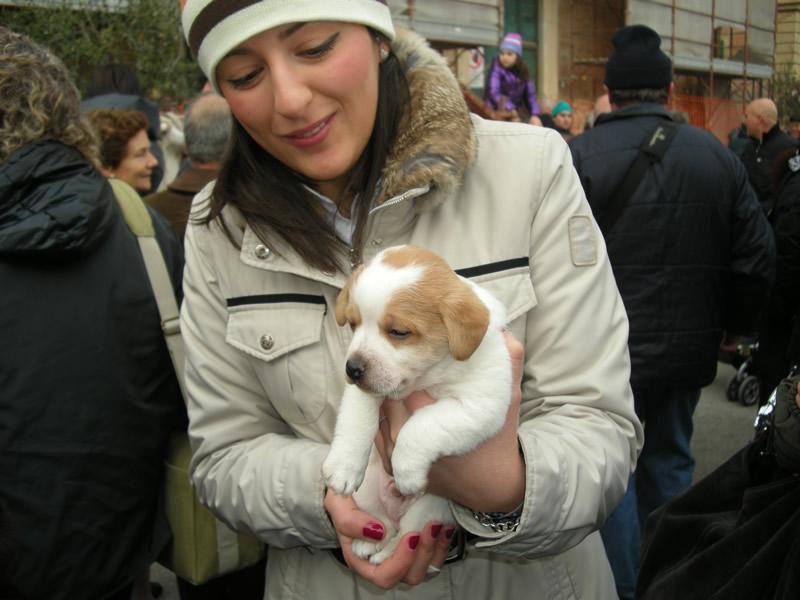 La Festa di Sant'Antonio a Cupra, i cittadini accorsi con i propri animali