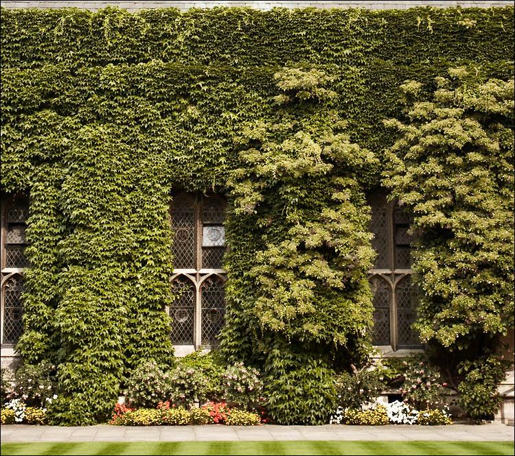 Edilizia sostenibile: muri verdi