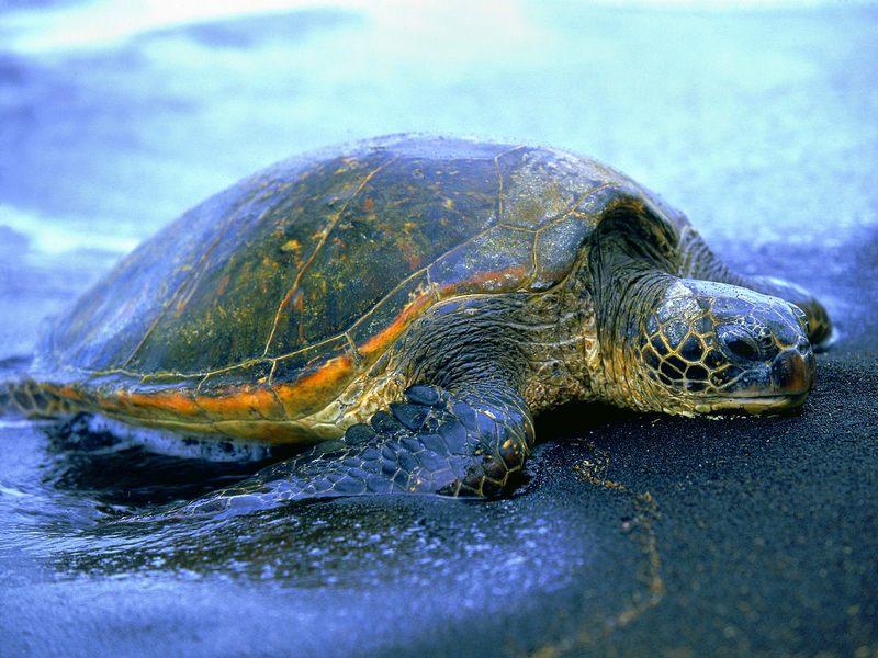Riviera oggi tartarughe marine regione conferma accordo for Vasche per tartarughe marine