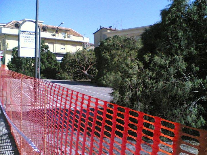 Pini abbattuti in via D'Annunzio