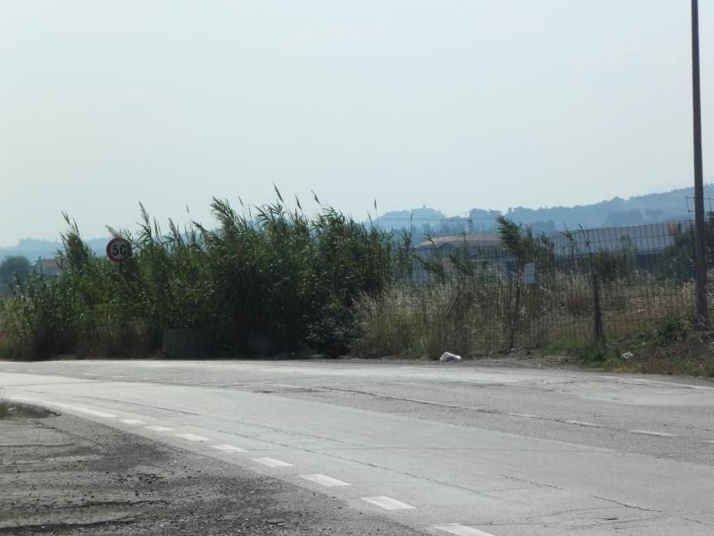 Erba alta e canneti ai margini delle strade