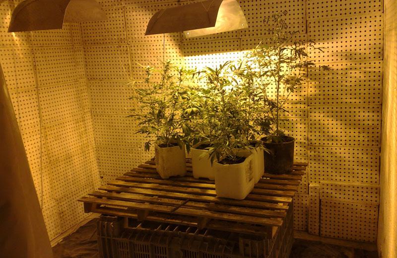 Il laboratorio per la produzione di marijuana trovato a Sant'Omero