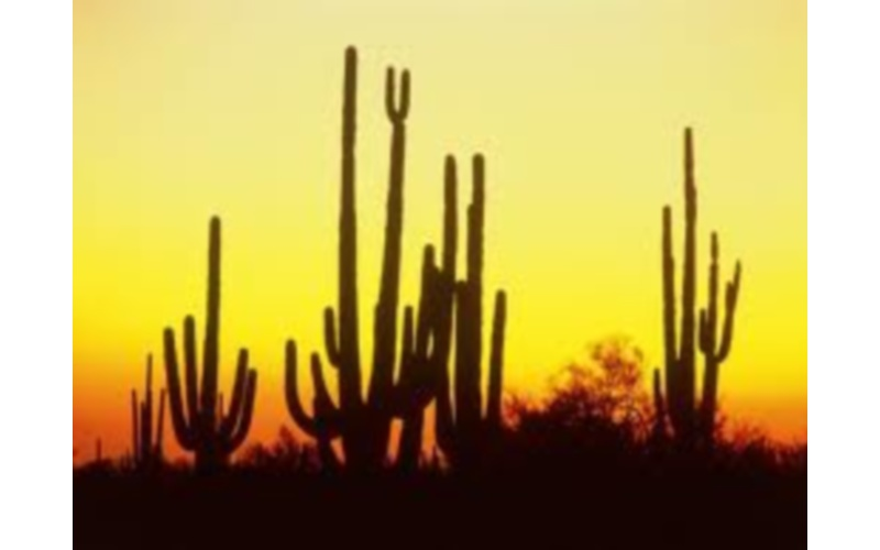 Cactus 2 (da Google)