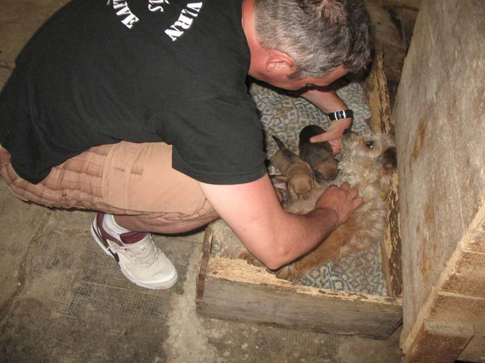 I cuccioli durante la poppata