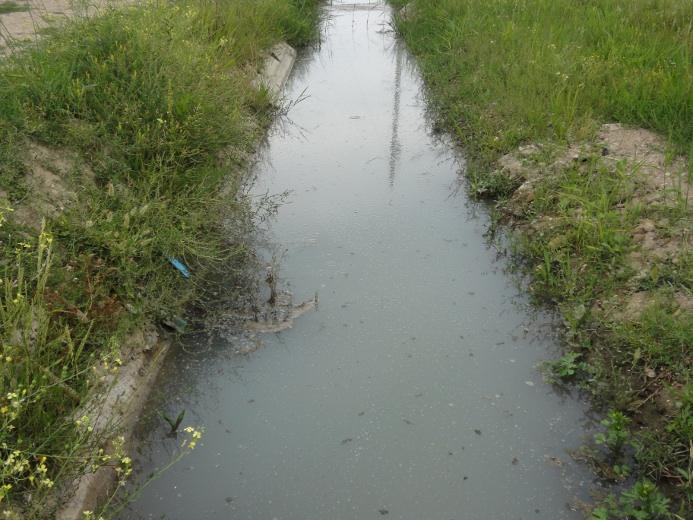 Il torrente presente lungo la Riserva Sentina