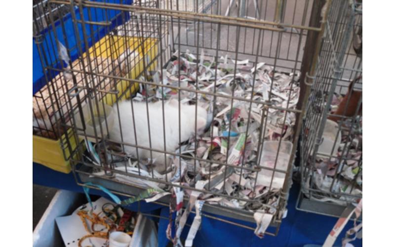 Fiera di Peterniano 2011. Condizione dei cuccioli in vendita