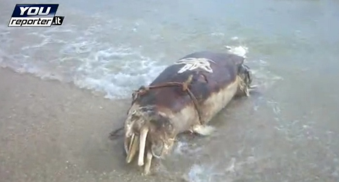 Delfino morto a riva. Foto tratta da youreporter.it
