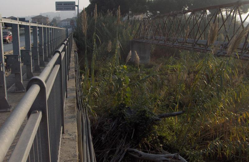 Alberi sradicati sotto il ponte della ss16
