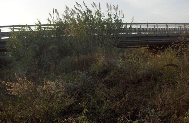 Il ponte sulla ss16