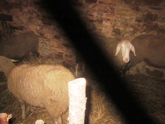 Presepe Vivente 2012 Grottammare  (62)