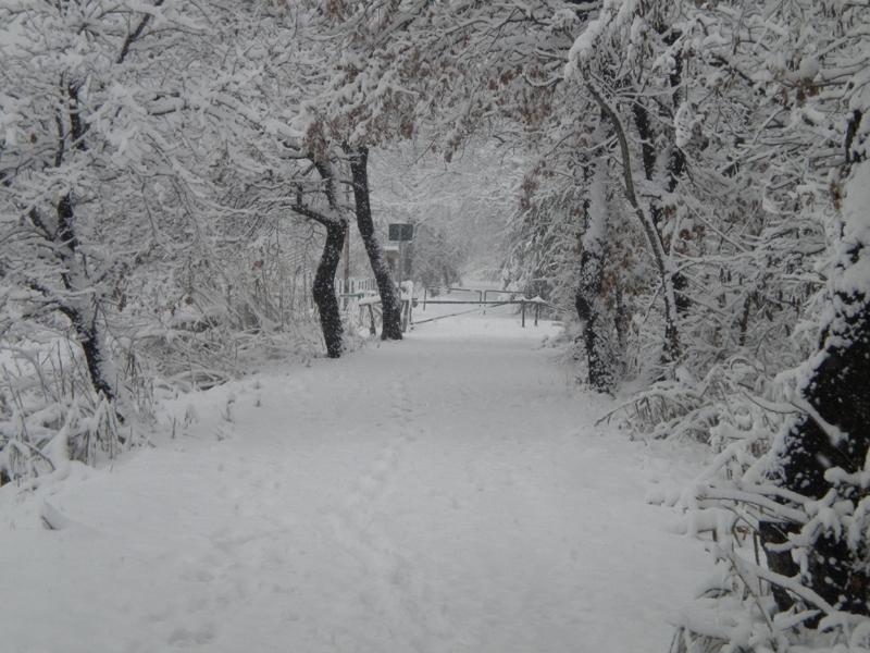 4 febbraio, neve, Filippo Guerrieri 4