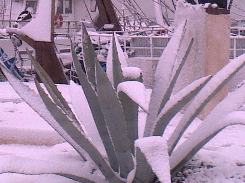 Artic Sun Beach San Benedetto, neve febbraio 2012,