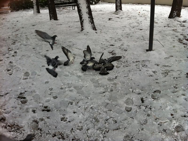 Atterraggio sulla neve, foto di Iraide