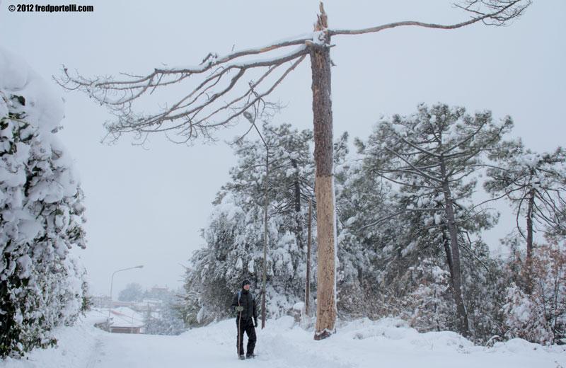 Neve febbraio 2012 Camminata Montefiore, un pino (Fred Portelli)