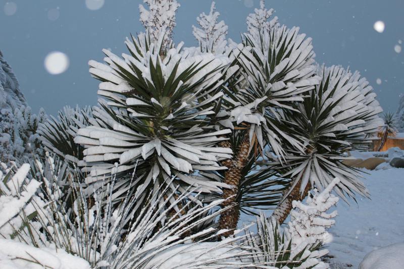 Cartolina di neve da Porto d'Ascol, 4 febbraio 2012 (mami9197)