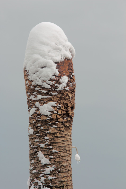 Neve a Cupra Marittima febbraio 2012, Monumento ai caduti (Fred Portelli)