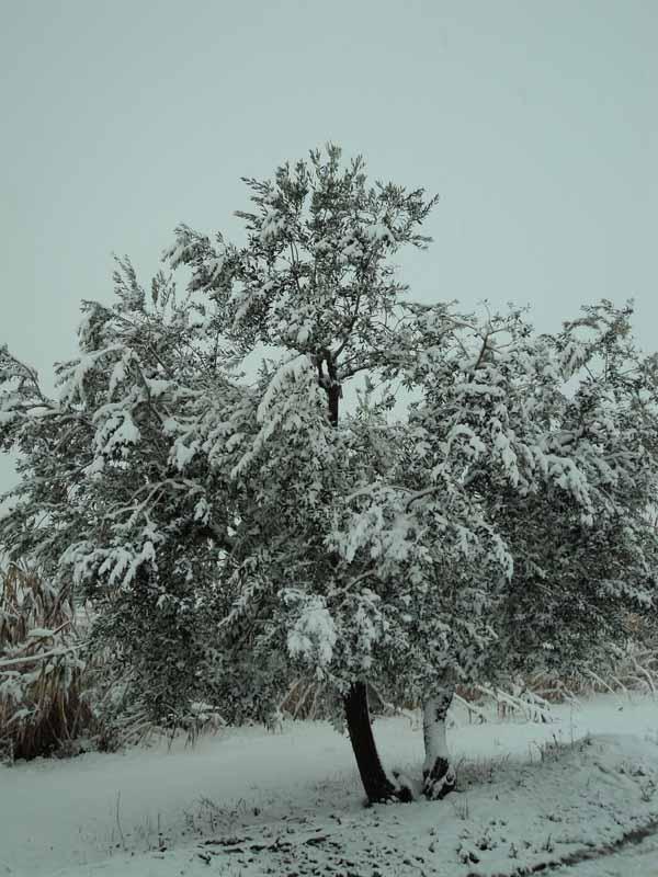 Foto neve da Ambra Siliquini, da Porto d'Ascoli