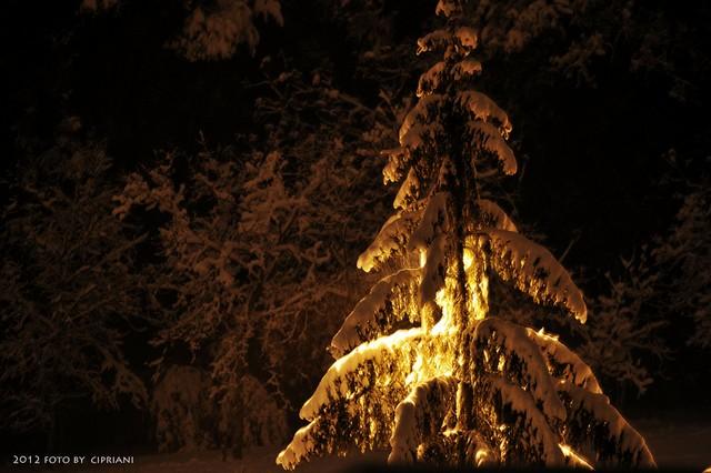 Foto neve di Andrea Cipriani. 5 febbraio 2012