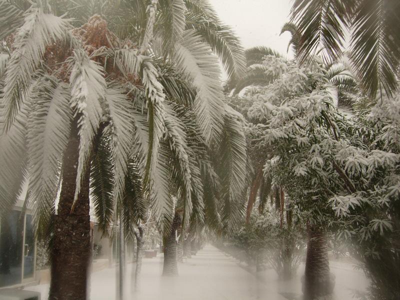 Neve nel piceno il 3 febbraio 2012. Foto di Ilaria Gandolfi