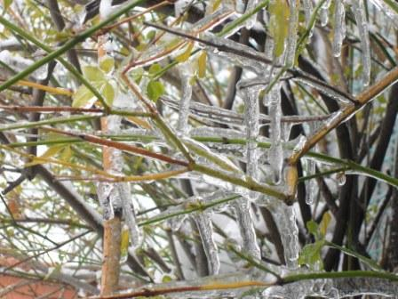 Ghiaccio fra gli alberi, San Benedetto 3 febbraio 2012 (Maria Paola Salzano, San Benedetto)