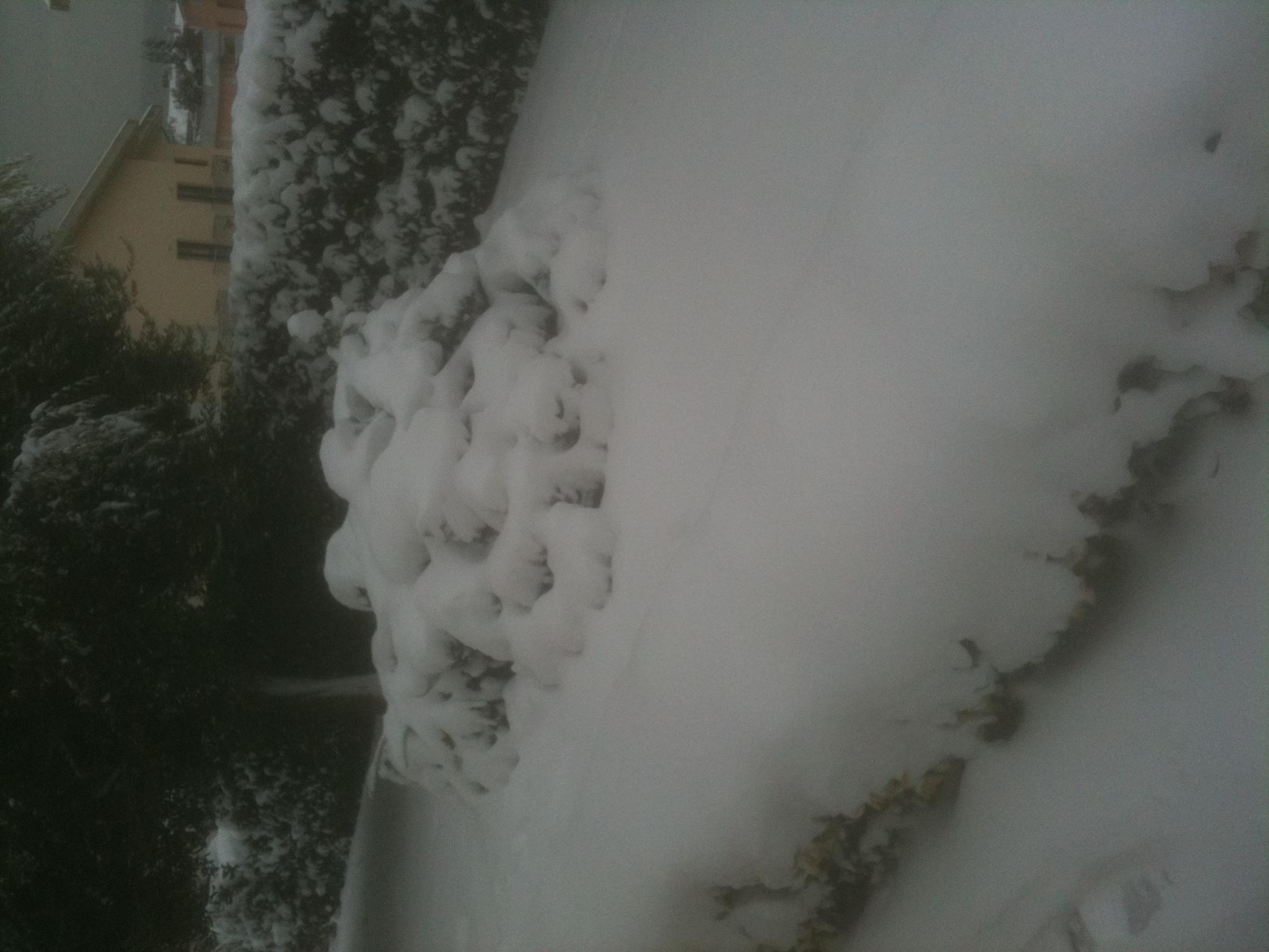 Grottammare, un giardino incantato con neve, febbraio 2012, Luciano Aubert