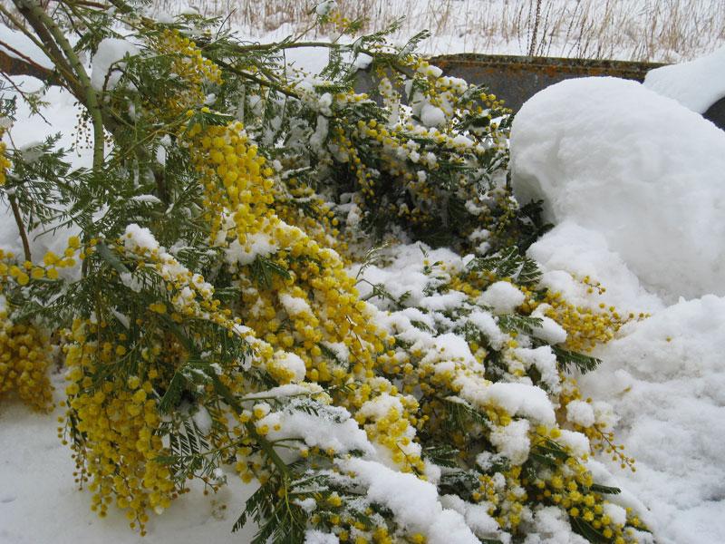 Neve a Colonnella 5 febbraio 2012