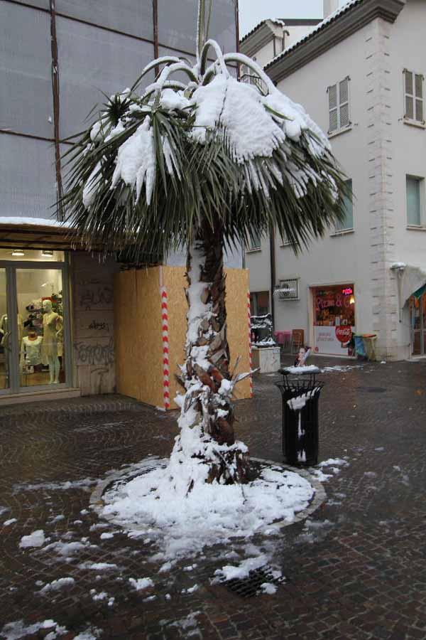 5 febbraio 2012, foto della neve in viale Secondo Moretti di Antonio L.
