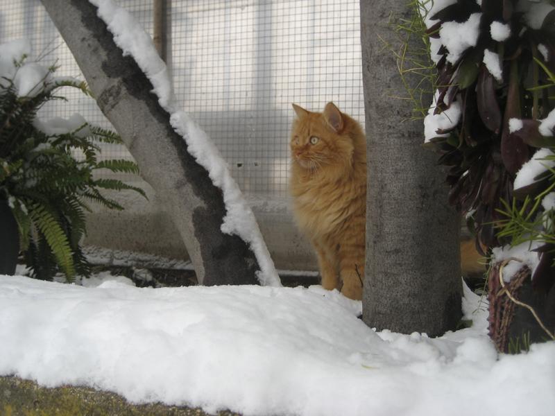 Il gatto delle nevi, 4 febbraio 2012 (katia ferracuti)