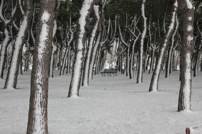 La panchina, neve 4 febbraio    (mami 9197)