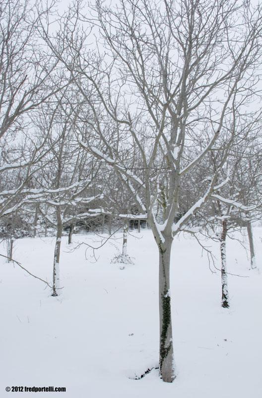 Neve a Montefiore febbraio 2012, Noci (Fred Portelli)