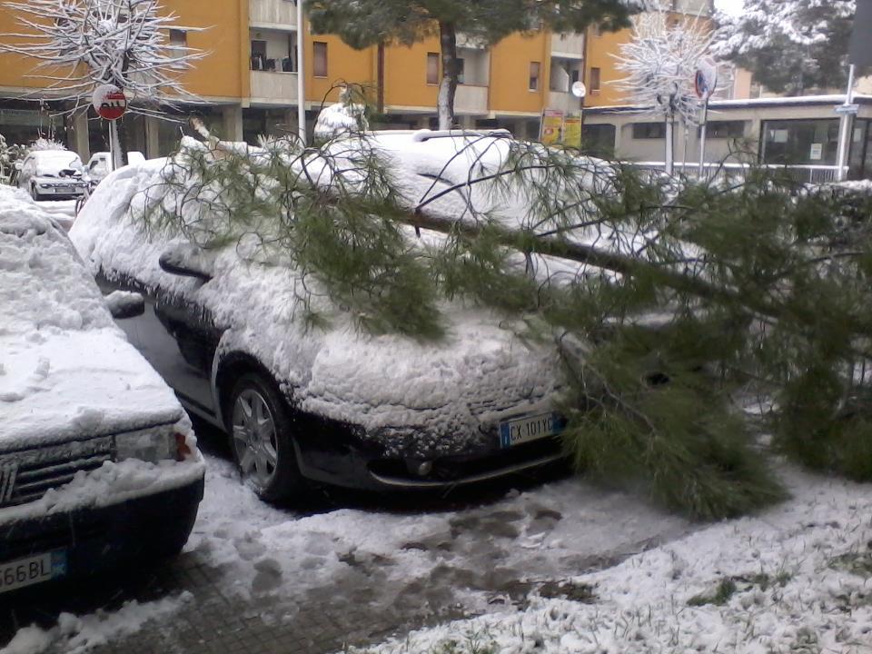 Neve 3 febbraio, Centobuchi, un pino caduto (da Lucianetto Lucenzo Bottoni)