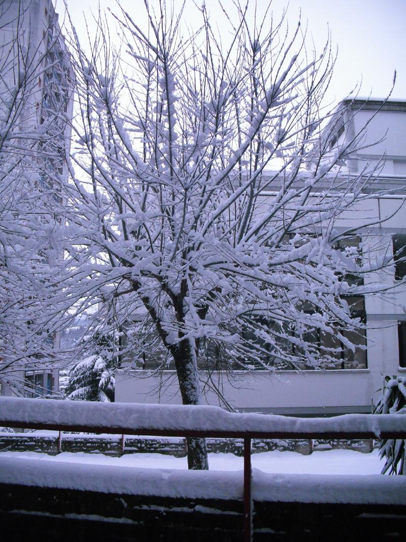 Neve 5 febbraio, Serena Bianchini, passeggiando verso Ascoli 1