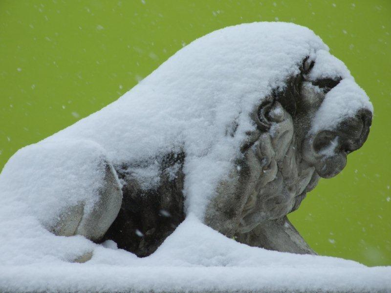 Neve, 7 febbraio 2012 foto Pierluigi Bartolomei 1