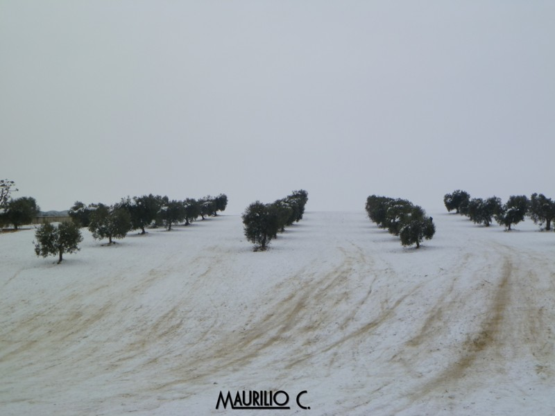 Neve San Benedetto, 5 febbraio, Maurilio Cestarelli Discesa-libera-sbt-1