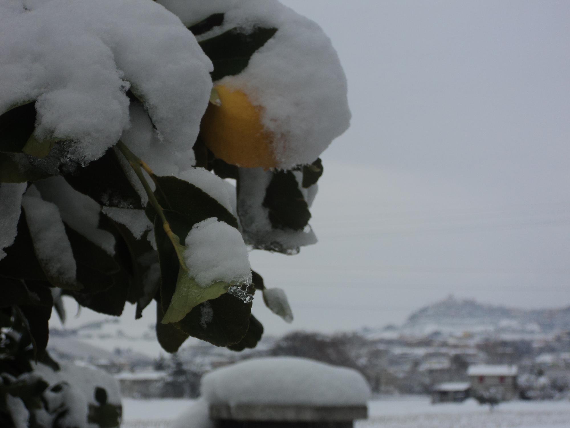 Neve a Centobuchi, 4 febbraio 2012 foto di Franco Tufoni 2
