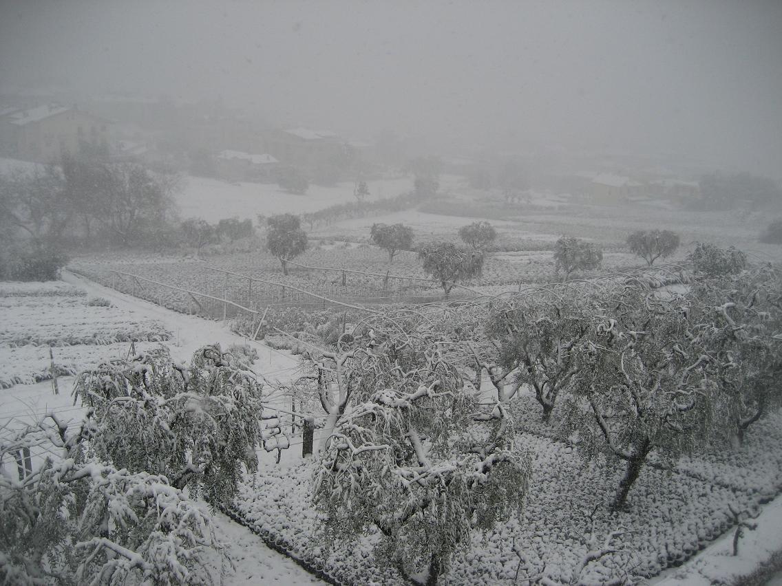 Neve a Grottammare, 3 febbraio 2012 (foto di Katia Ferracuti)