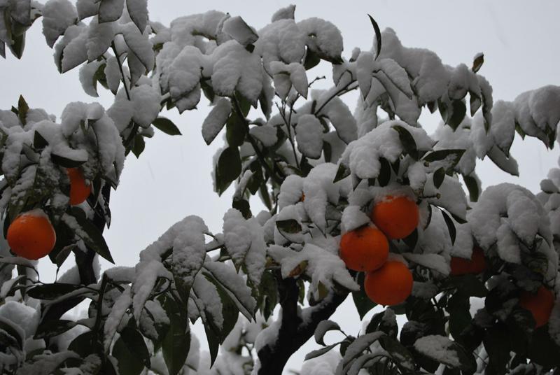 Neve a Grottammare, 3 febbraio, foto Luigi Scartozzi 1