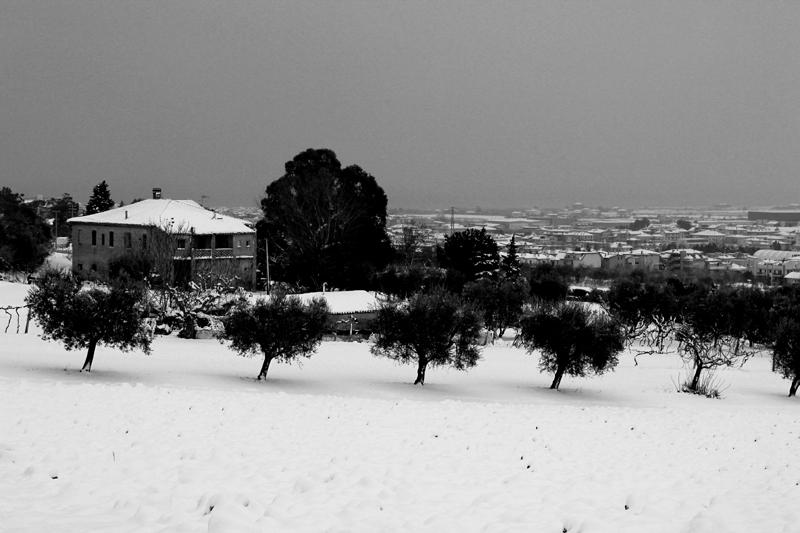 Neve a Montecretaccio, febbraio 2012, Barbara Vecellio