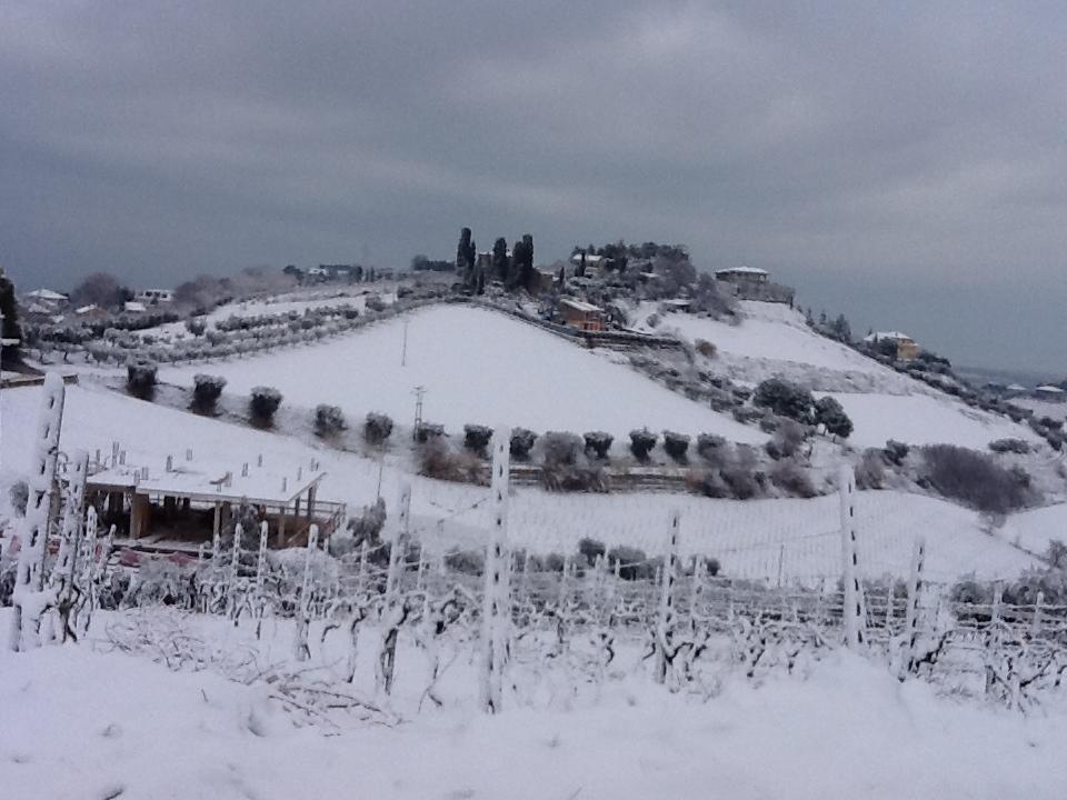 Neve a Montraprandone 3 febbraio 2012 (2)