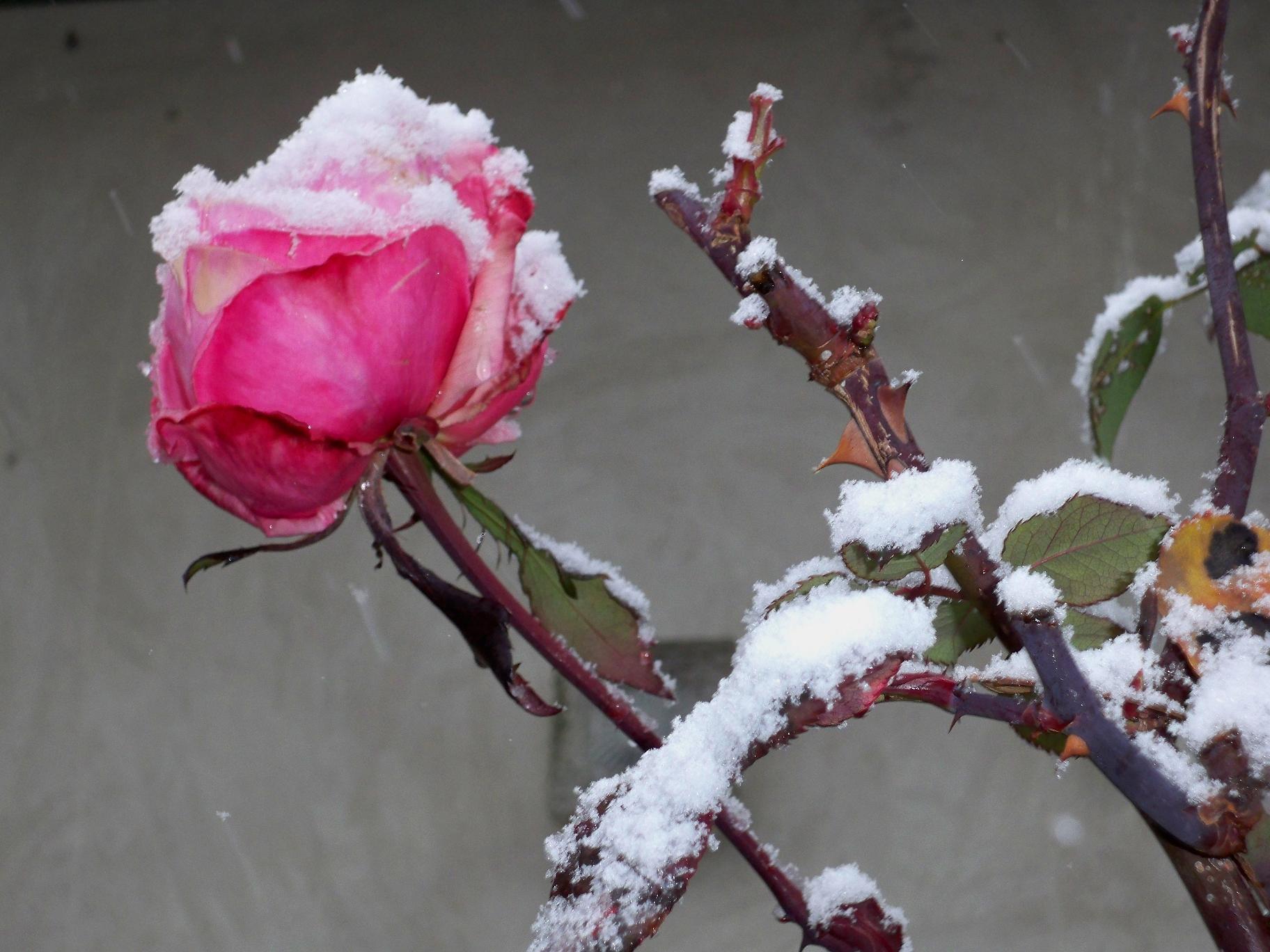 Neve a San Benedetto, 4 febbraio 2012 foto di Carlos 5