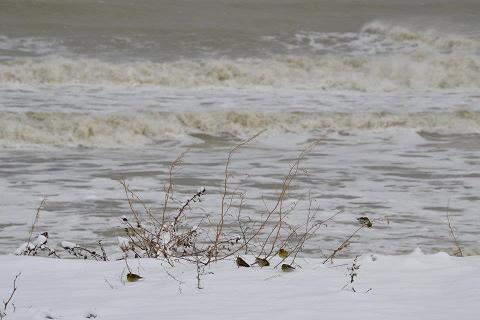 Neve a San Benedetto, 4 febbraio 2012, foto di Carlos 6