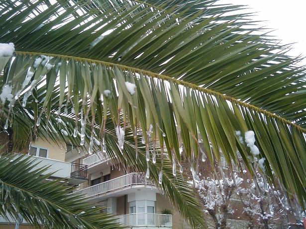 Neve a San Benedetto, 6 febbraio 2012, foto di Luca e Perla