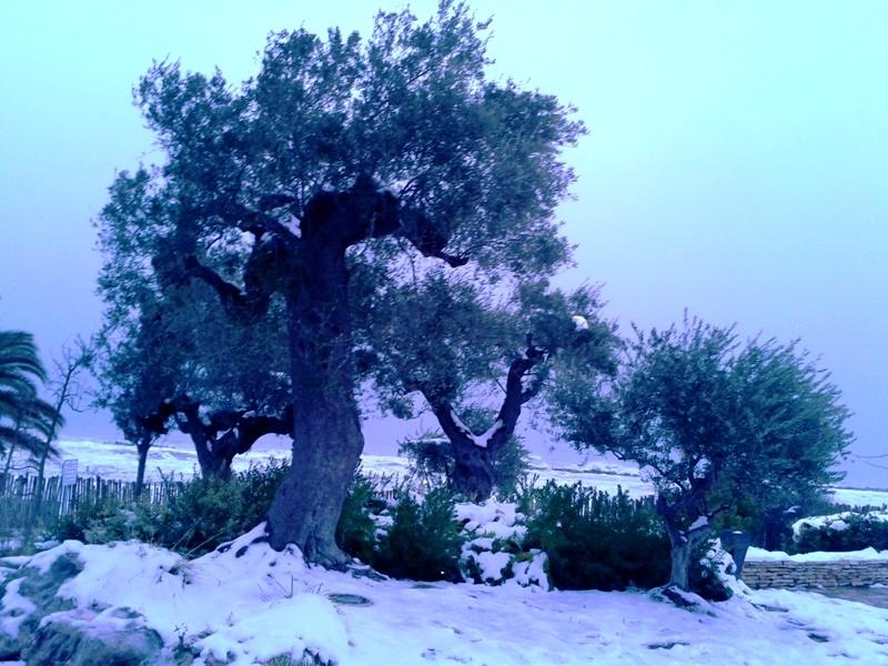 Neve a San Benedetto, 7 febbraio 2012 foto Roberta Corimbi 4